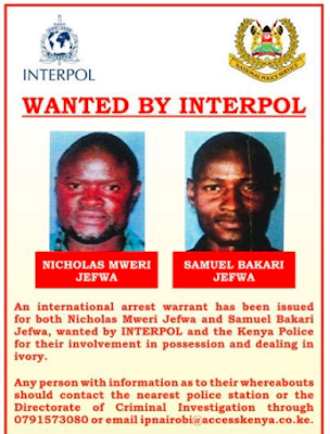 You are currently viewing Fugitive Mombasa Brothers Now Linked to West African Ivory Cartel