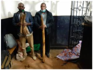 2 men nabbed with Six Elephant Tusks