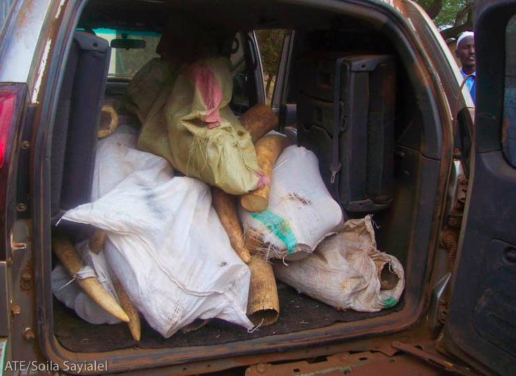 April 2009 – 703 kg of Ivory Seized From Vehicle  Travelling From Tanzania