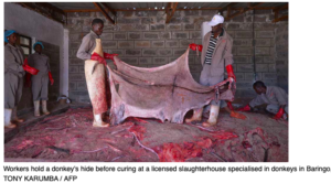 Africa's Donkeys and Traditional Chinese Medicine (TCM)