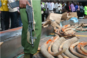 July 2009: Jomo Kenyatta IA –  Kenya seizes coffin-stashed ivory