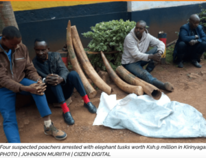 Four Arrested with 90 kg of elephant ivory in Central Kenya