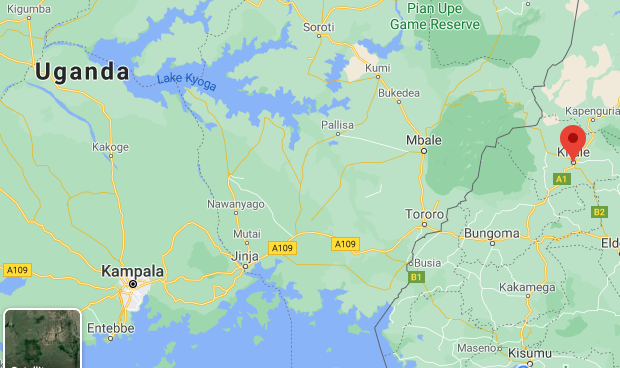 Kitale Police Seize 14 kg of Elephant Tusks and Arrest One Man