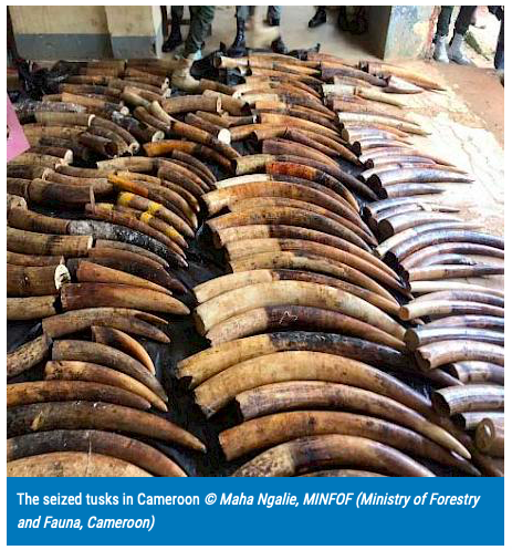 675 kg of Ivory From Gabon Seized in Cameroon.