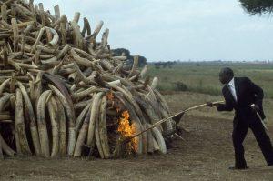 Will Kenya Extradite Ivory Trafficker Mansur Surur