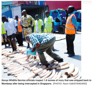 """Legal Precedent or """"Legal"""" Corruption – The Repatriation of Seized Ivory"""