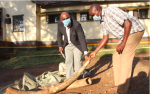 Man Arrested with 54 kg of Elephant Tusks Near Tanzanian Border
