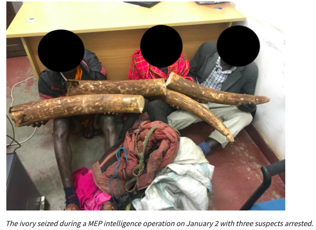 Mara Elephant Project Intel Leads to 3 ivory arrests