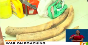 Narok – Two Arrested with Tanzanian Ivory