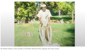 Meru National Park – Two Arrested with 28 kg of Ivory