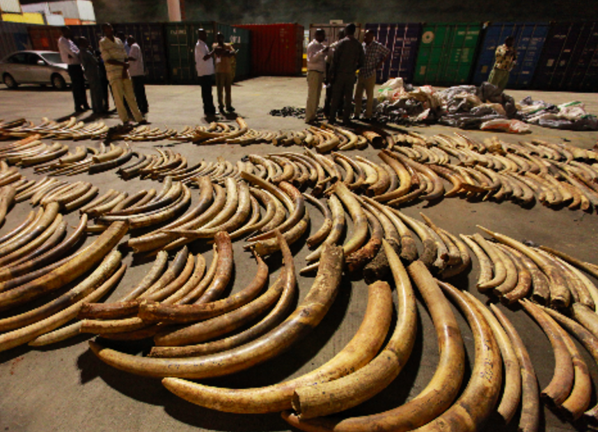 Eight Year Mombasa Ivory Case Closer to Conclusion – CF 417/13