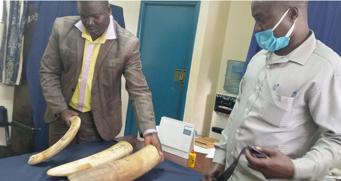 Busia – Uganda Military Officer Arrested at Kenya Border Town with 3 Elephant Tusks