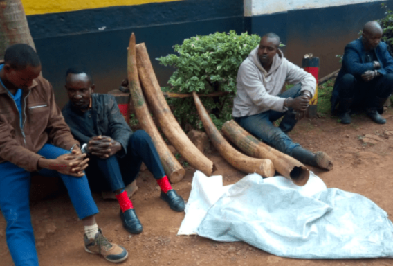 Bail Release Unlikely for Four Arrested last September with Ivory