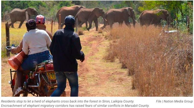 You are currently viewing Marsabit – Does the recent killing of two elephants in Kalacha signal a new poaching rampage?