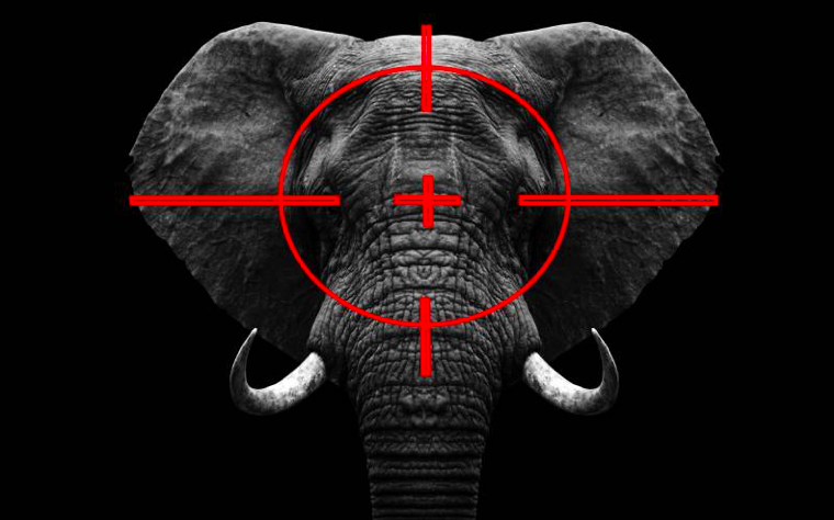 You are currently viewing Inside dark, impenetrable world of illicit trade in wildlife trophy