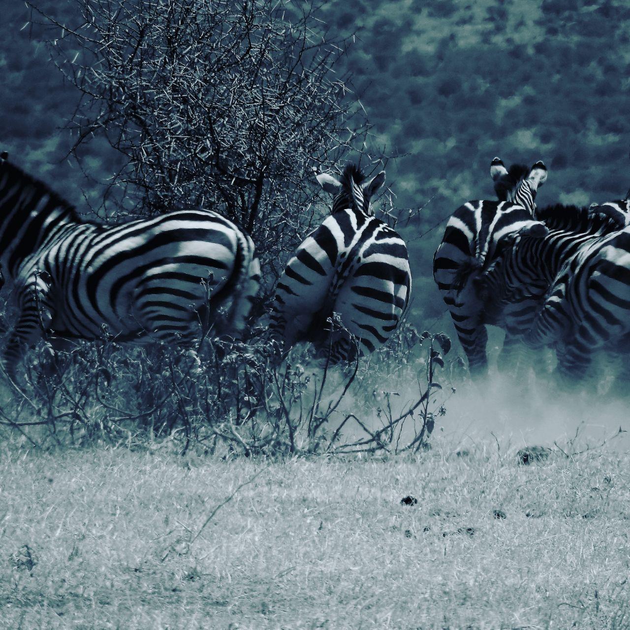1500 kilos of Zebra Meat Seized in Nairobi Meat Market