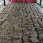 How do traffickers ship ivory and pangolin scales from the Congo into Vietnam and China?